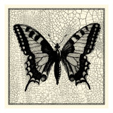 Classical Butterfly I