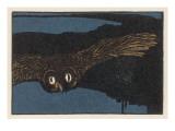 An Owl Staring at You at Night
