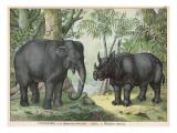 An Indian Elephant and a Rhinoceros
