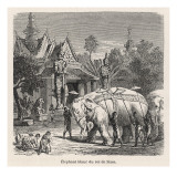 White Elephant Siam