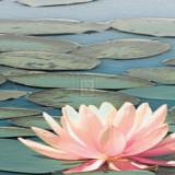 Lily Pool IV