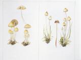 Mushrooms, Illustration