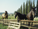 Horses on Farm in Siena, Italy