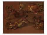 cinq lynx