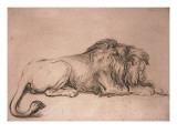 Lion couche rongeant un os
