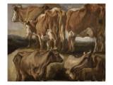 Etudes de cinq vaches