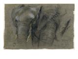 Etudes d'une tete d'elephant