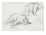 Deux etudes d'ours