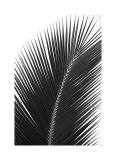 Palms, no. 14