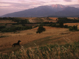 Horse Running Through Fields at the Base of Mount Olympus
