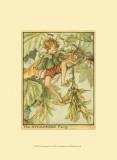 The Sycamore Fairy