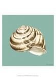 Shell on Aqua I