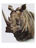 White Rhinoceros, 1980