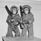 Two Chimpanzees Dressed As Policemen, Standing Holding Guns