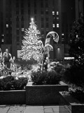 Christmas Tree in Front of Rockefeller Centre at Night, New York City