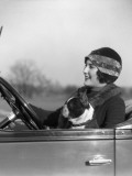 Woman at Steering Wheel Driving Car With Boston Terrier Passenger