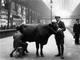 Platform Milking