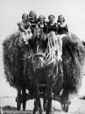 Ride on Hay Cart