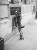 Dog Mail