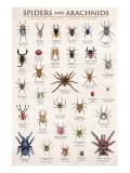 Spiders and Arachnids