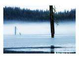 Dead Tree in Hyatt Lake
