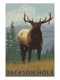 Jackson Hole, Wyoming - Elk