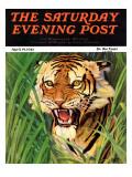 """""Snarling Tiger,"""" Saturday Evening Post Cover, April 19, 1941"