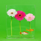 Flowers and Gold Fishes II