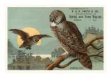 Canada Owls