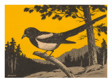Woodcut of Magpie