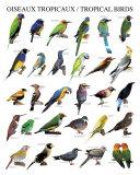 Tropical Birds