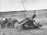 Boy Driving Father's Horse Team and Binder in Wheat Field