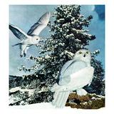 """""Snowy Owls"""", September 14, 1957"