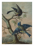 A Kingfisher on a Sapling; and a Blue Tit with a Finch on a Sapling