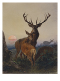 A Stag with Deer in a Wooded Landscape at Sunset