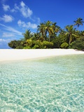 Palm Trees and Beach on South Male Atoll in the Maldives
