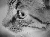 Side of Cat's Face