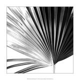 Black and White Palms IV