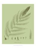 Fresh Ferns III