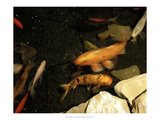 Goldfish Pond I