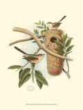 Titmouse & Nest