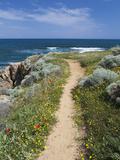 Coastal Path with Spring Flowers, Near Chania, Chania Region, Crete, Greek Islands, Greece, Europe