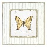 Garden Swallowtail