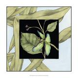 Dragonfly Inset VI