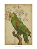 Parrot and Palm III