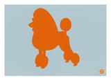 French Poodle Orange