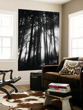 Sunlight Through Trees, Mount Rainier National Park, Washington, USA