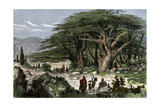 Travelers Stopping to Rest Among a Grove of Cedars in Lebanon