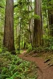 Hiking Trail I