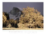 Half Dome and Elm